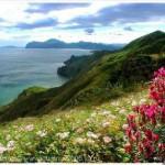 Крым привлекает все больше российских туристов