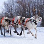 Открываем 8 чудес Большого Урала для новогодних поездок