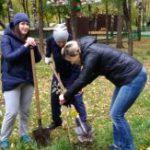 В Парке Победы появилось 15 молодых серебристых тополей